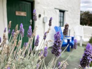cot 2 blue chair lavender